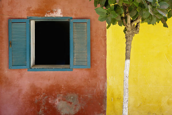A Tree Outside A Colorful Building And A Window With Blue Shutters; Dakar Senegal